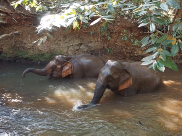 Eles love the water to wash and cool off and then throw dirt over themselves to stay cool adn protected from the sun.