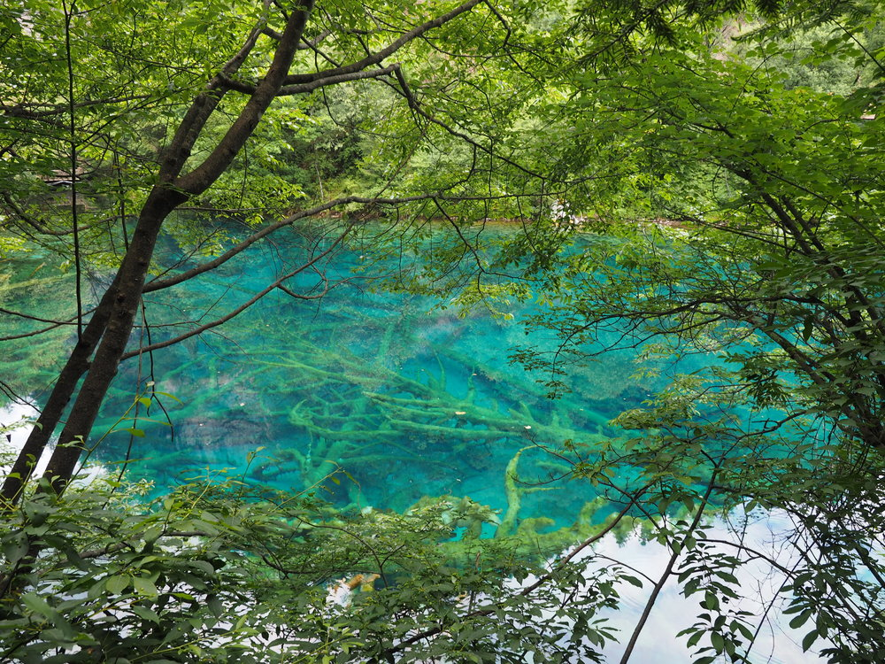 The clarity of the water in Jiuzhaigou is incredible