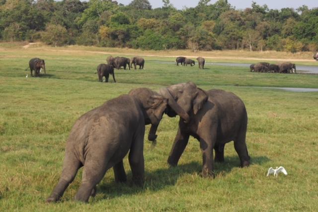Just a little elephant dispute
