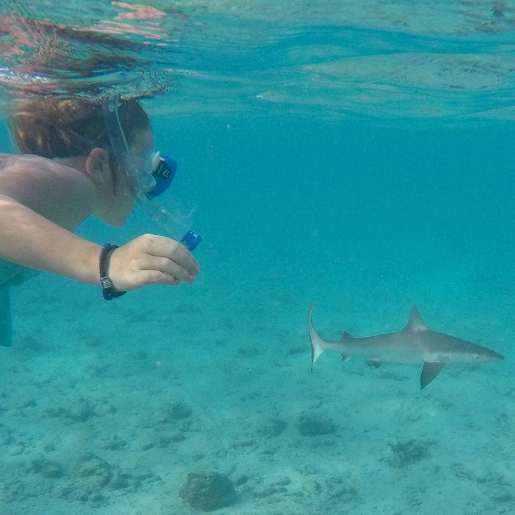 Swimming with reef sharks in the lagoon