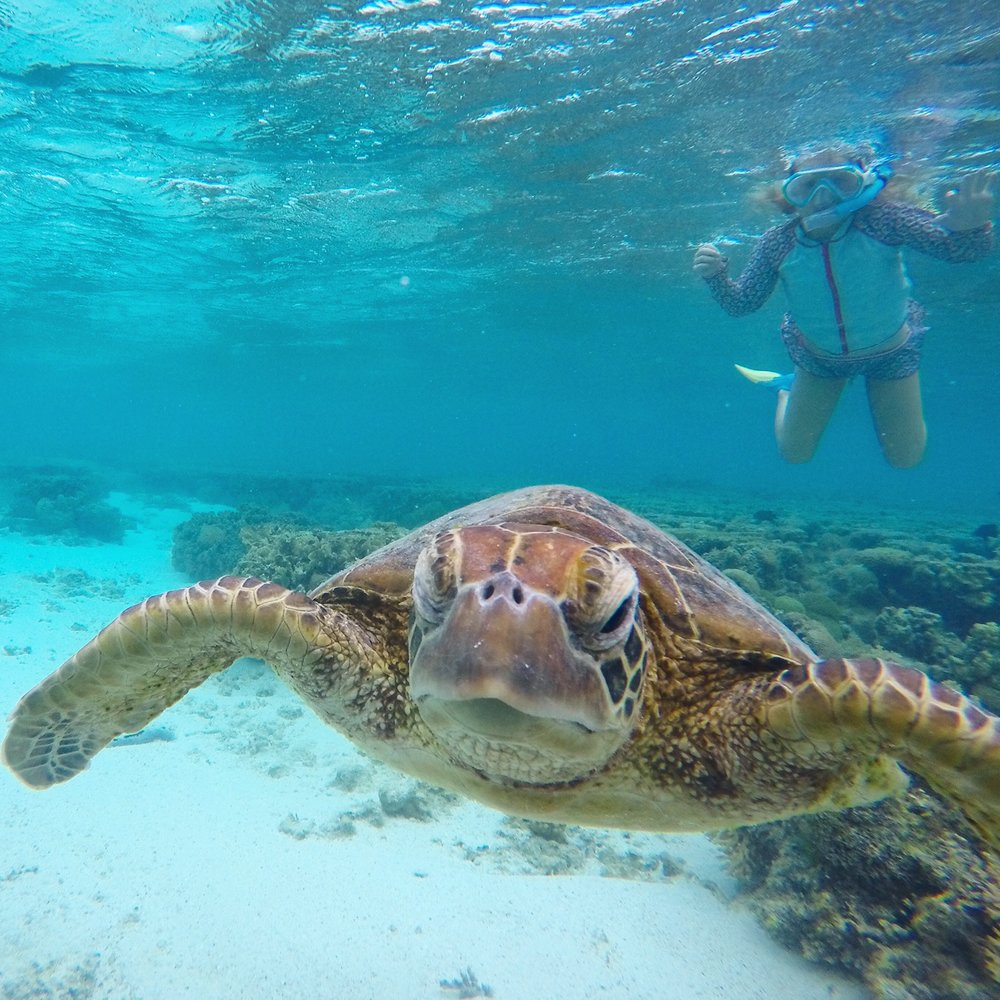 Snorkelling with turtles at Lady Elliot Island