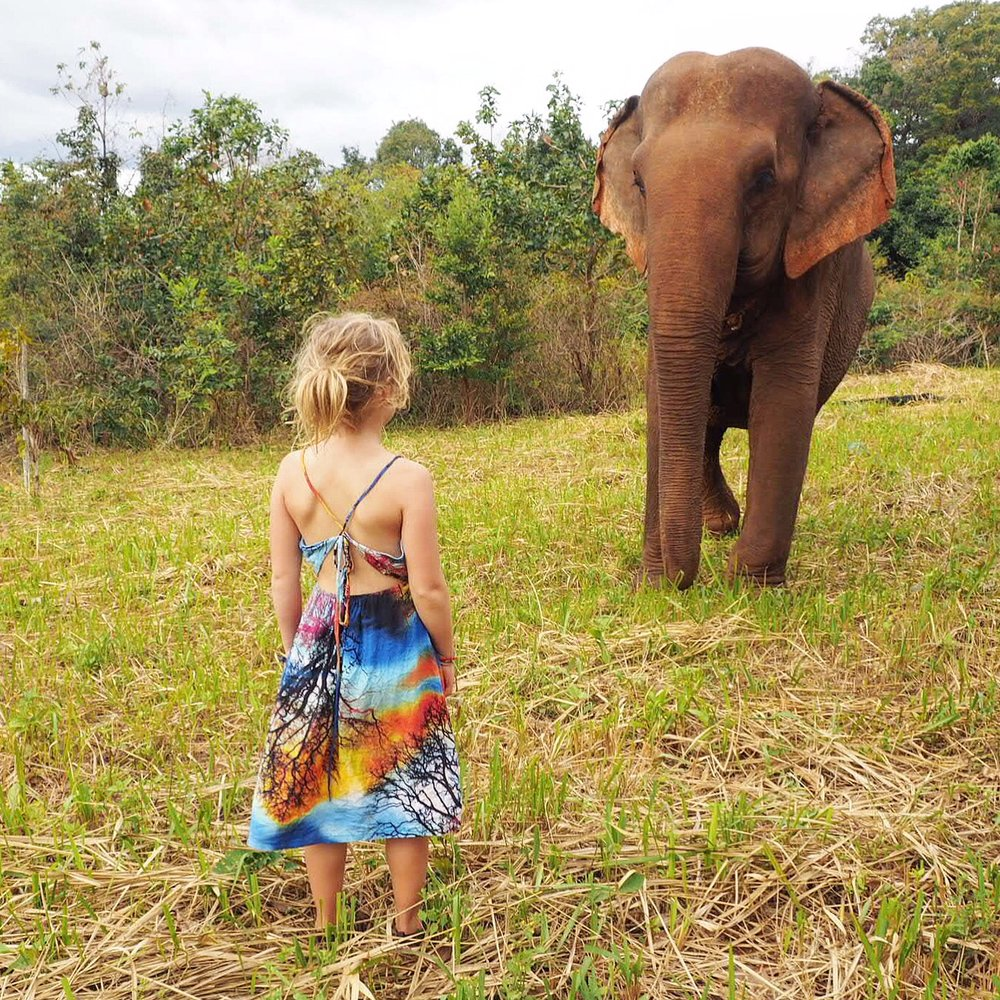 Elephant Valley Project, Cambodia