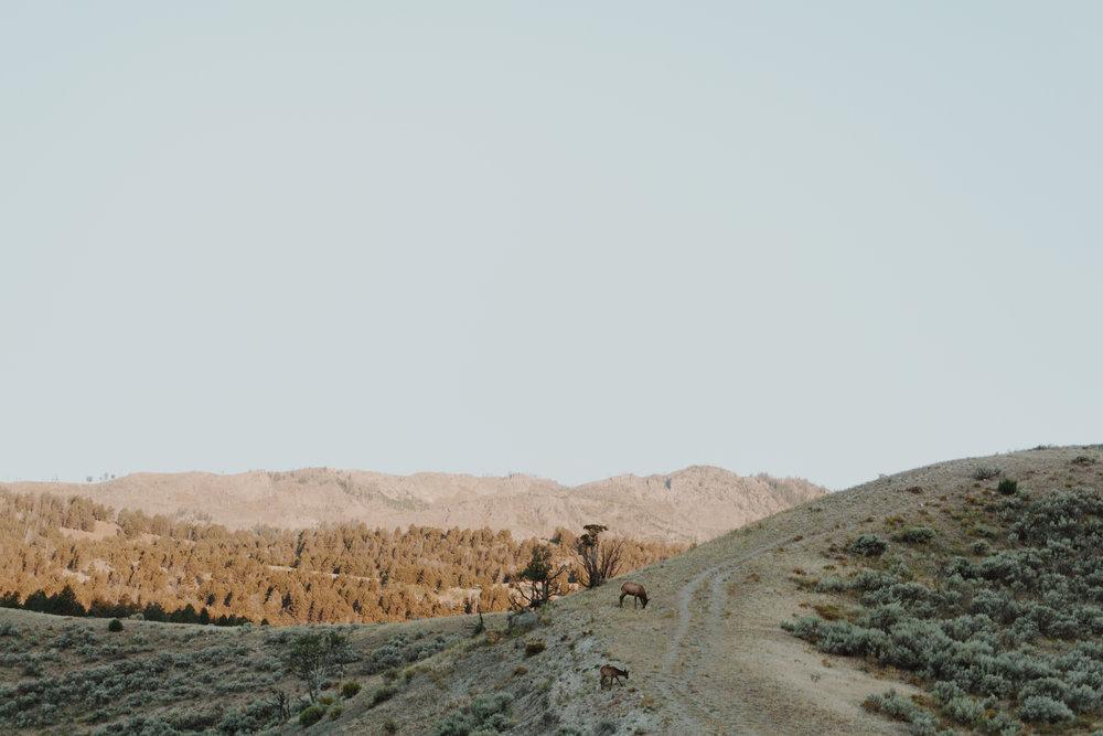 north of yellowstone somewhere - morning