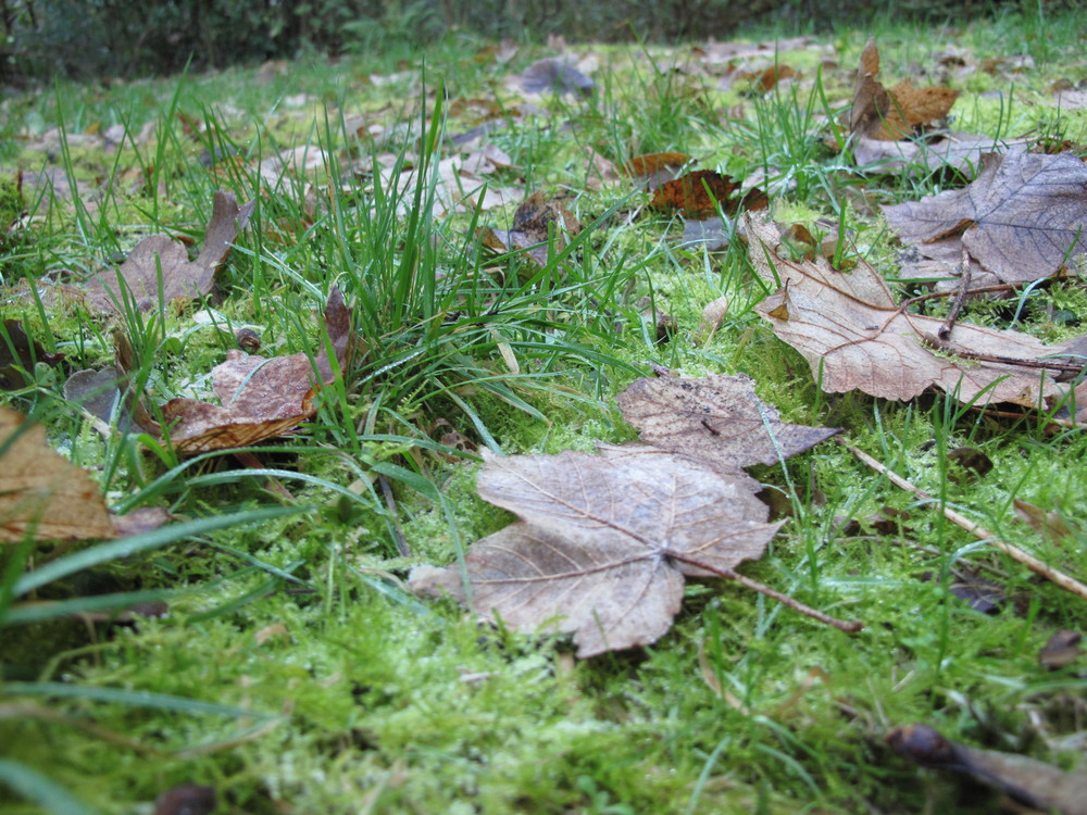 mossy-ground-autumn-leaves