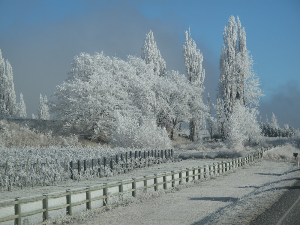 hoar frost on trees NZ