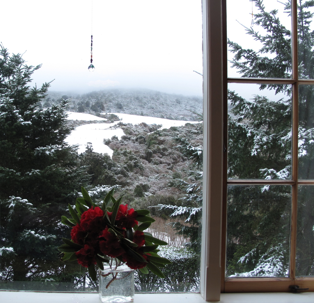 red rhododendrons in snow