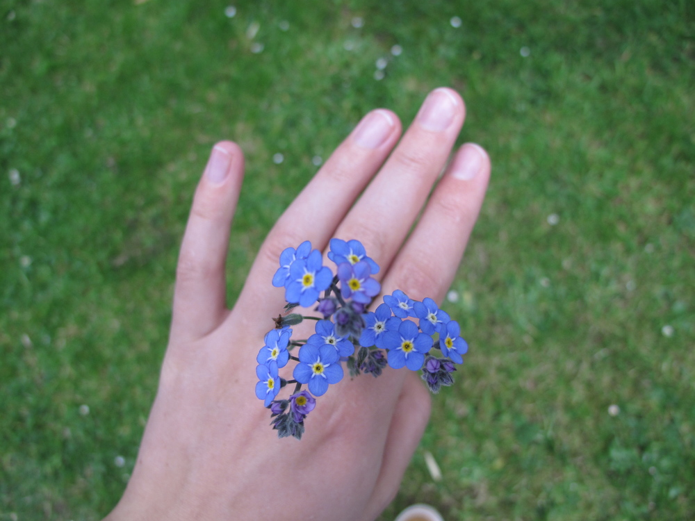 natural flower jewellery forget-me-nots