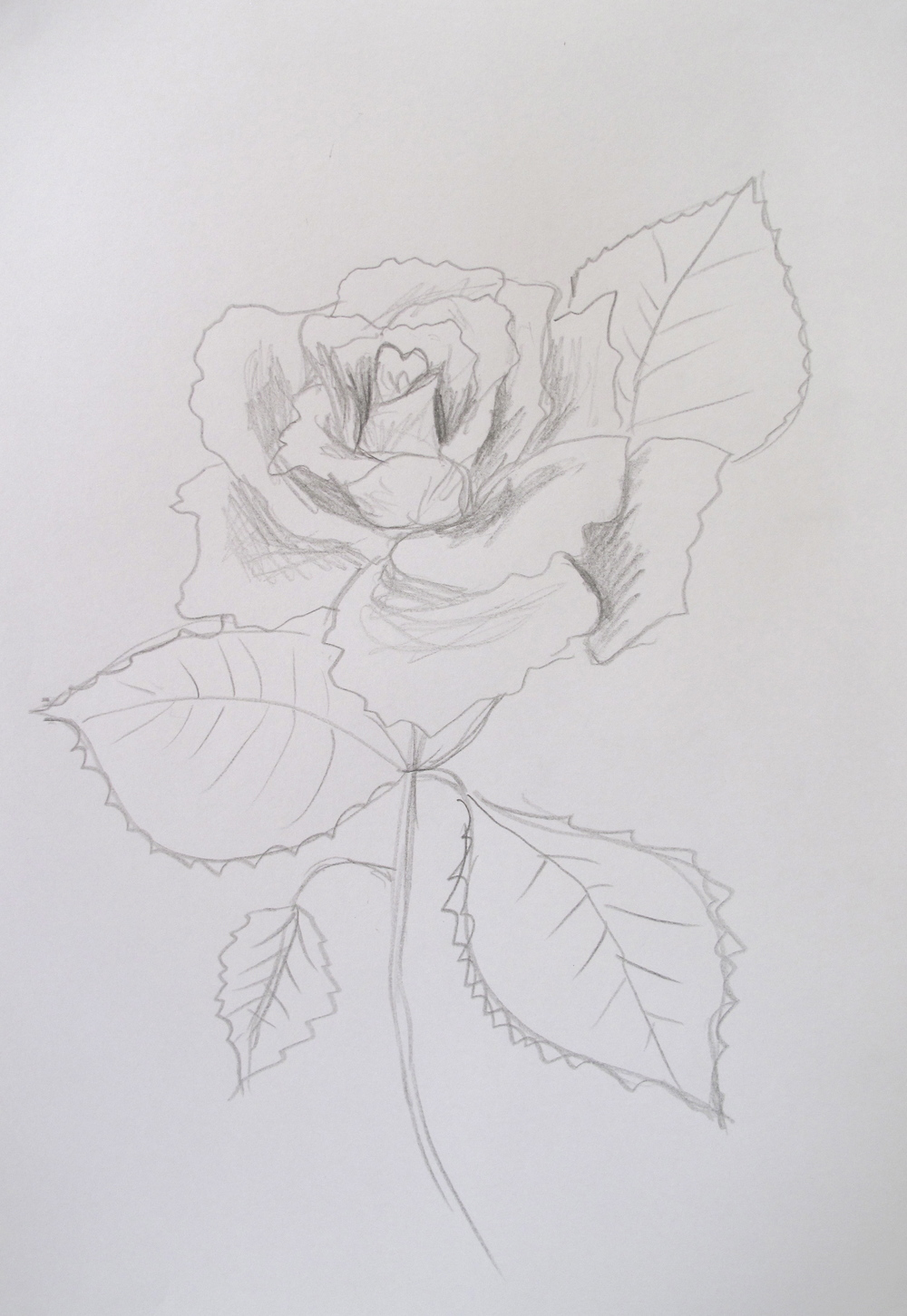 simple sketch of a rose