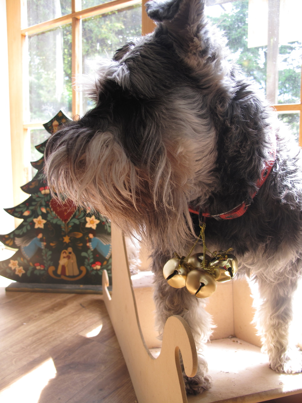 Christmas dog portrait jingle bells