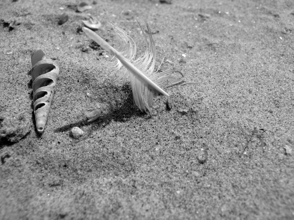 spiral shells and feathers in the sand - black and white art photo