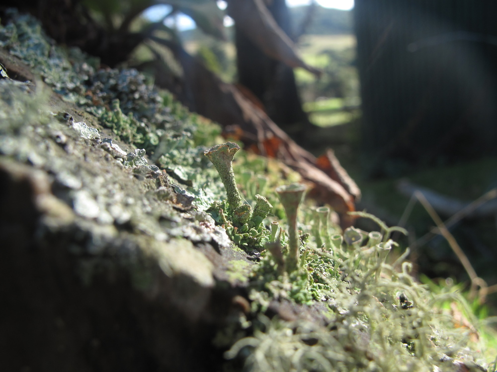 hidden tiny kingdoms in the moss and lichen
