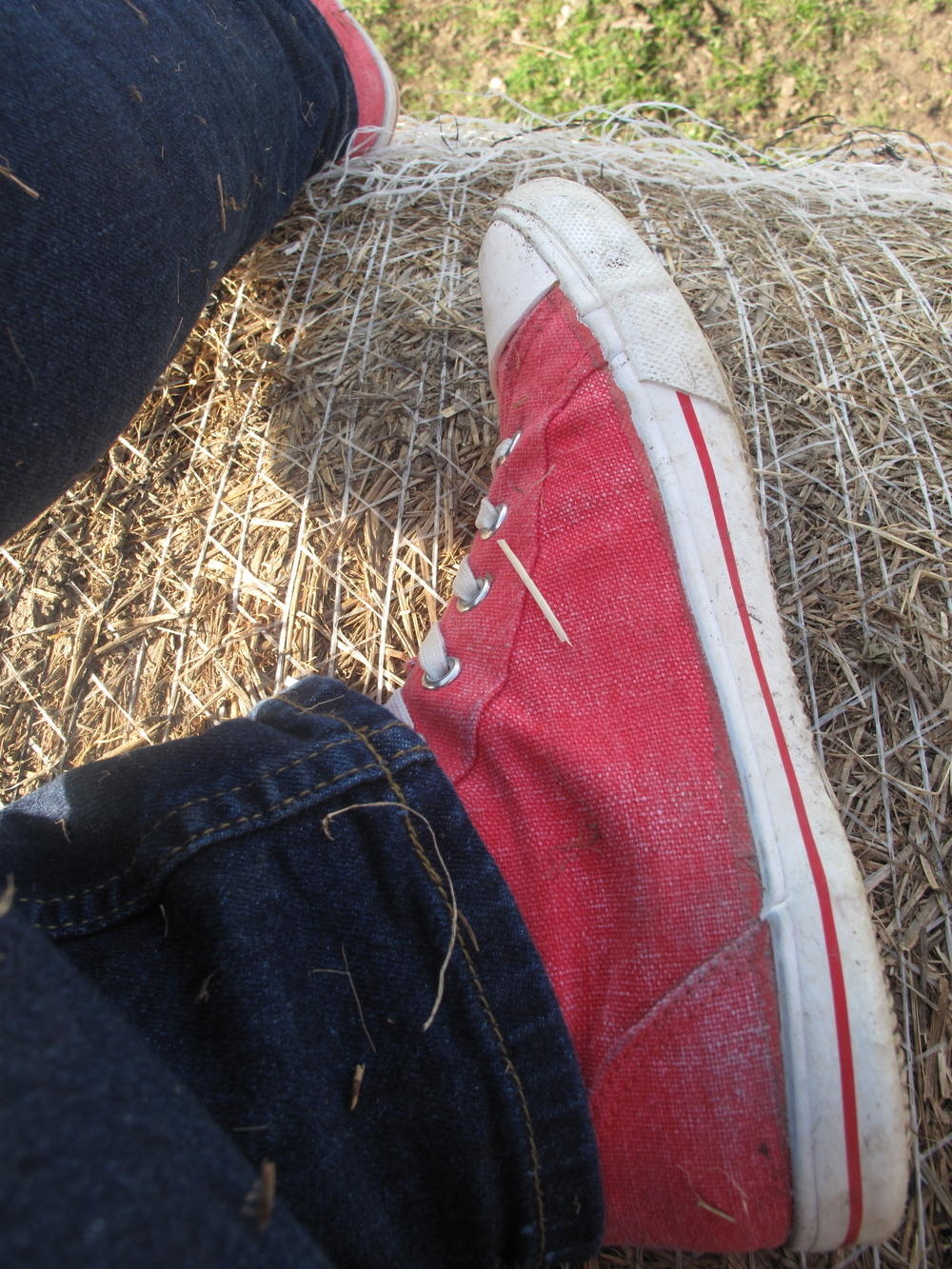Red sneakers and gold hay