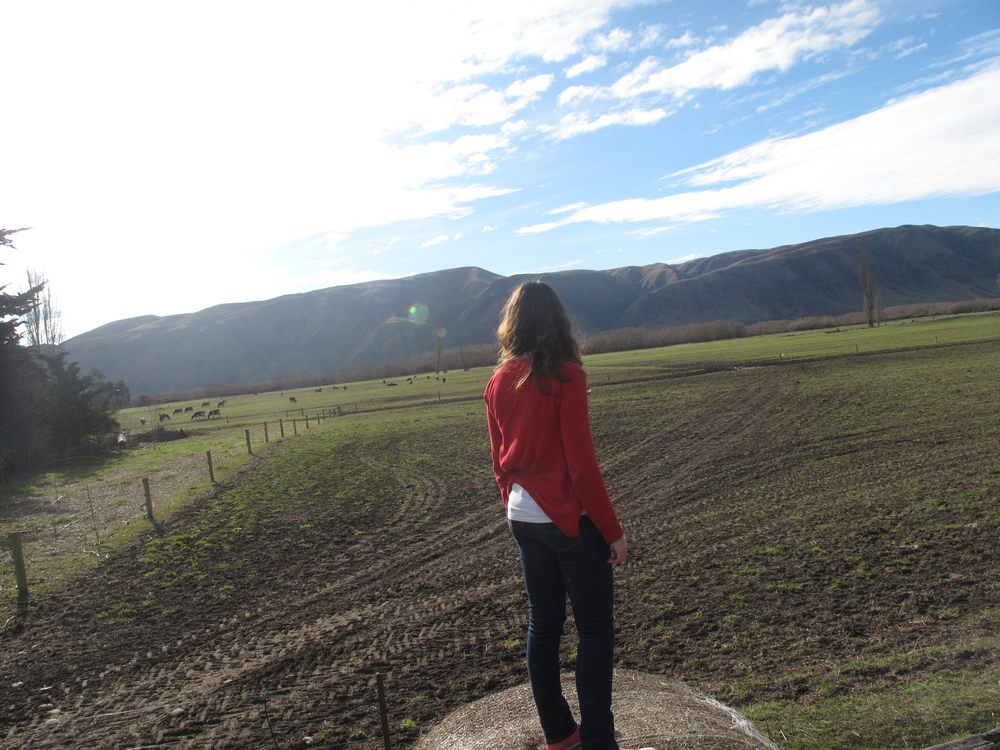 Standing atop a hay bale in NZ
