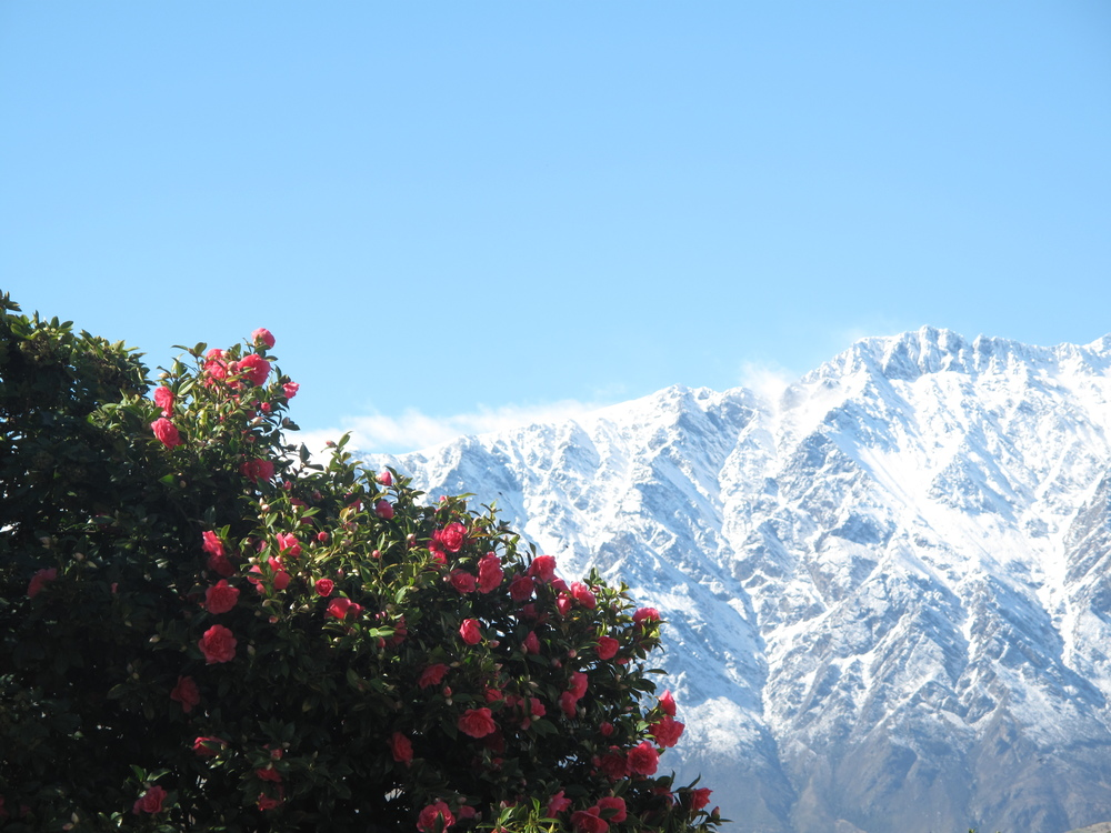 Snow on the mountains in Queenstown with roses