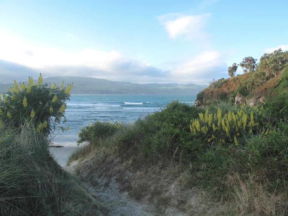 Purakaunui beach Dunedin NZ