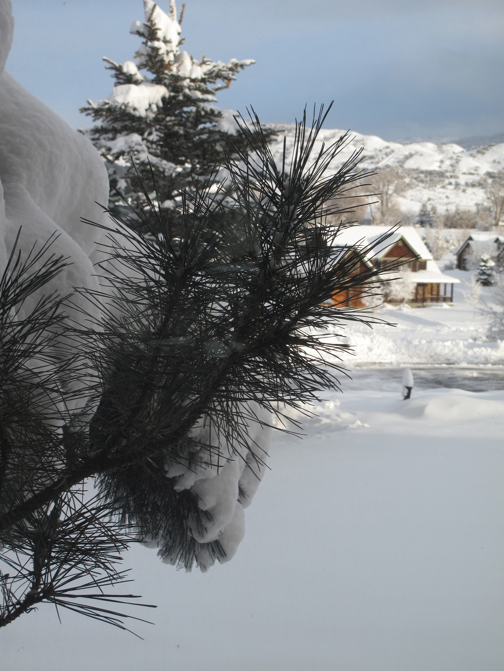 Colorado gingerbread houses through the snow and pine trees