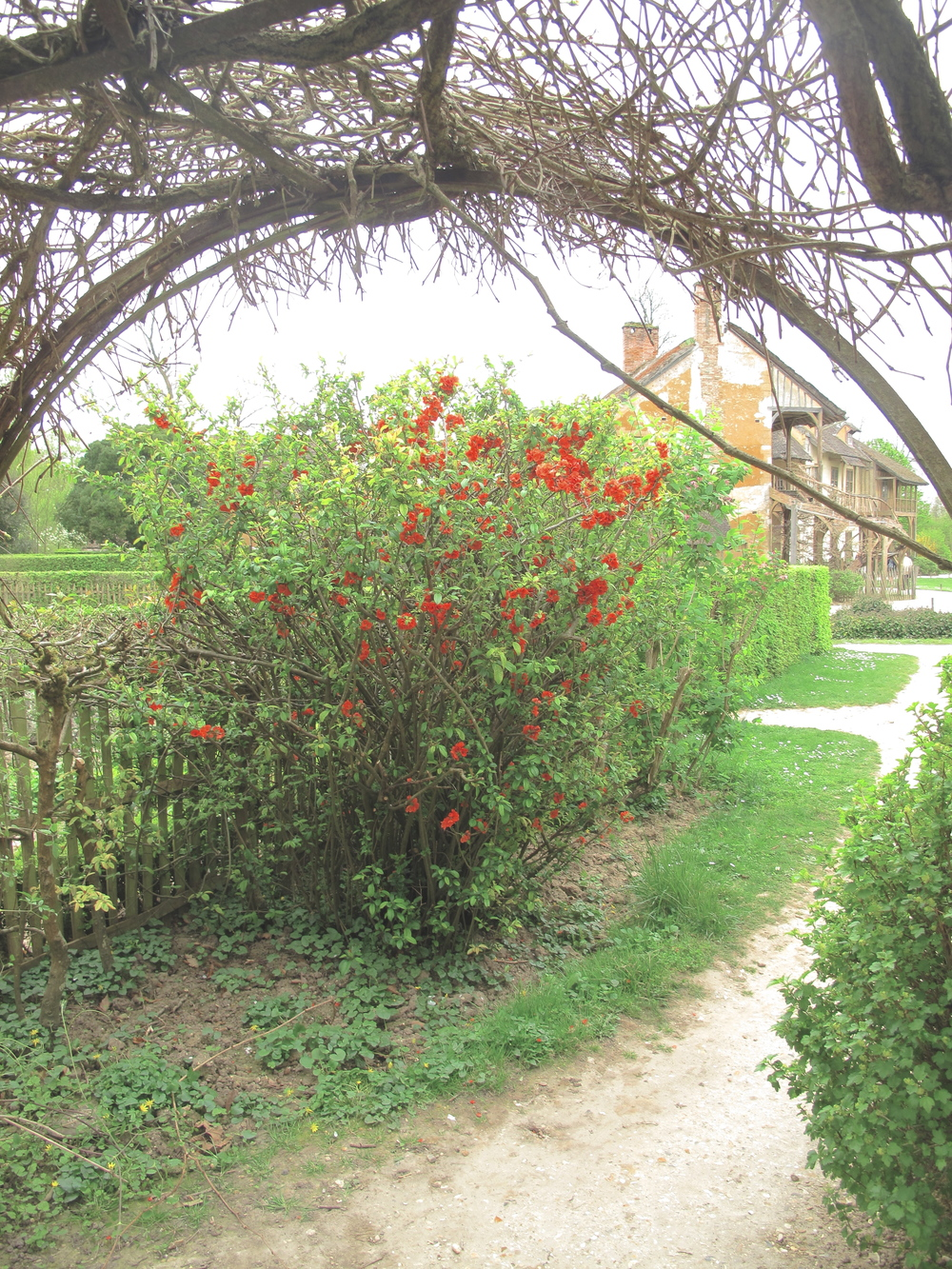 the Hameau de la Reine - trellises of roses