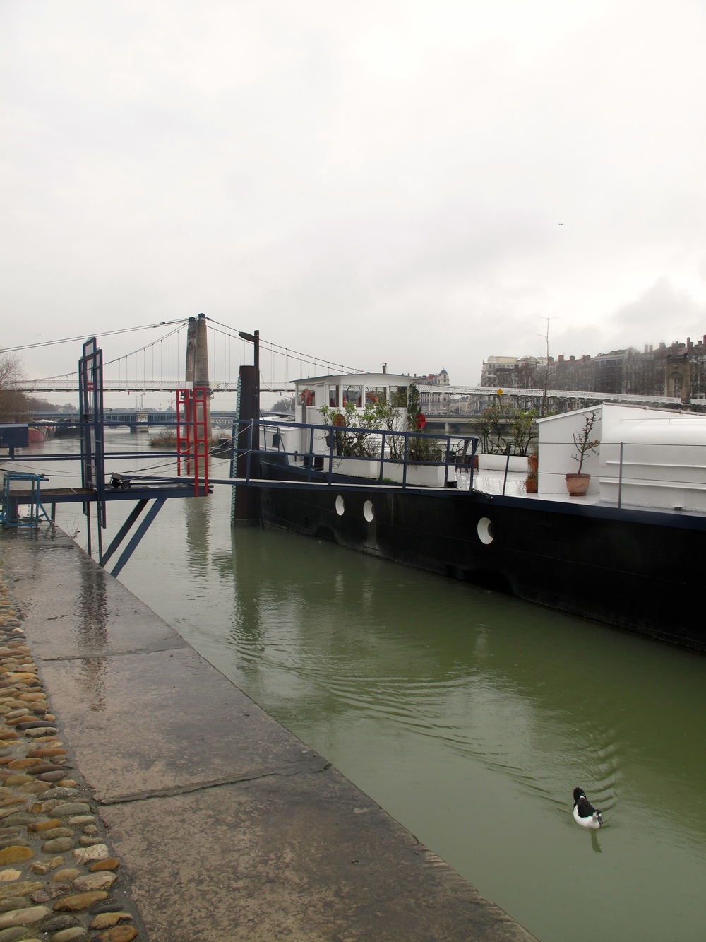 Bateaux on the Rhône river in Lyon