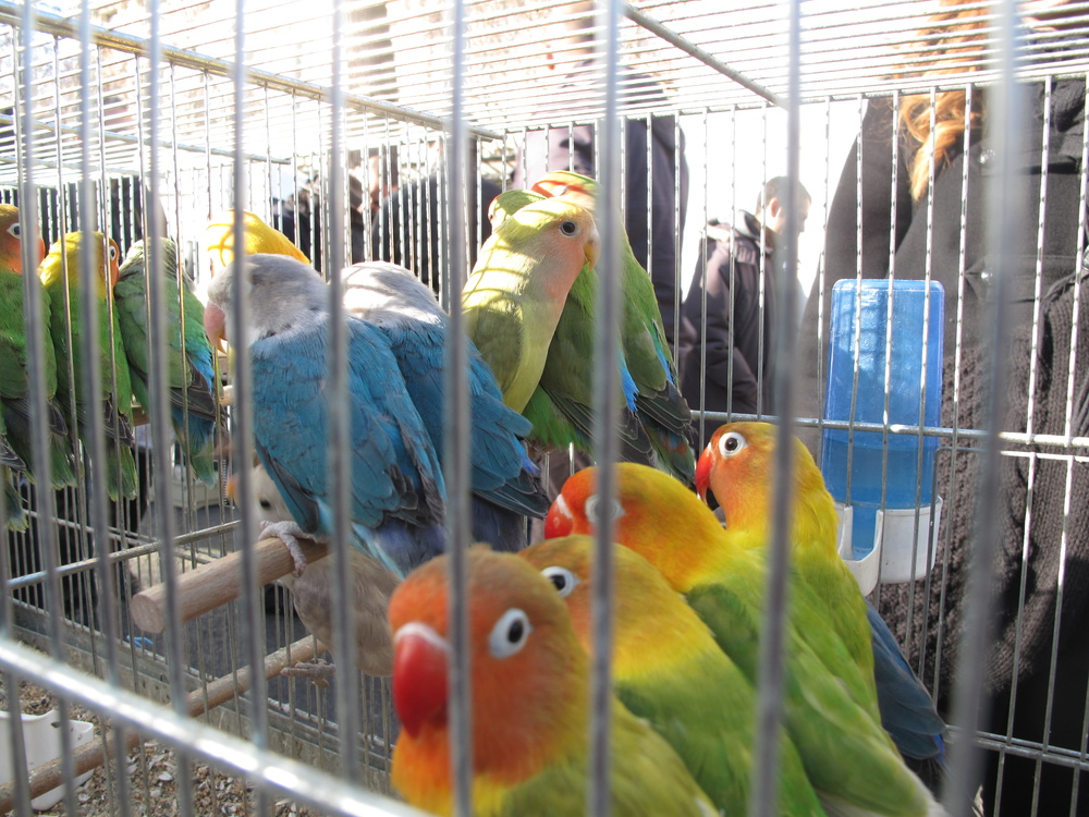 Birds in a market on the Île de la Cité