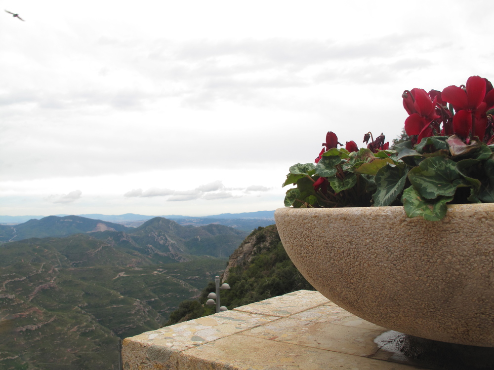 View of Catalonia and some flowers seen from Montserrat monastery
