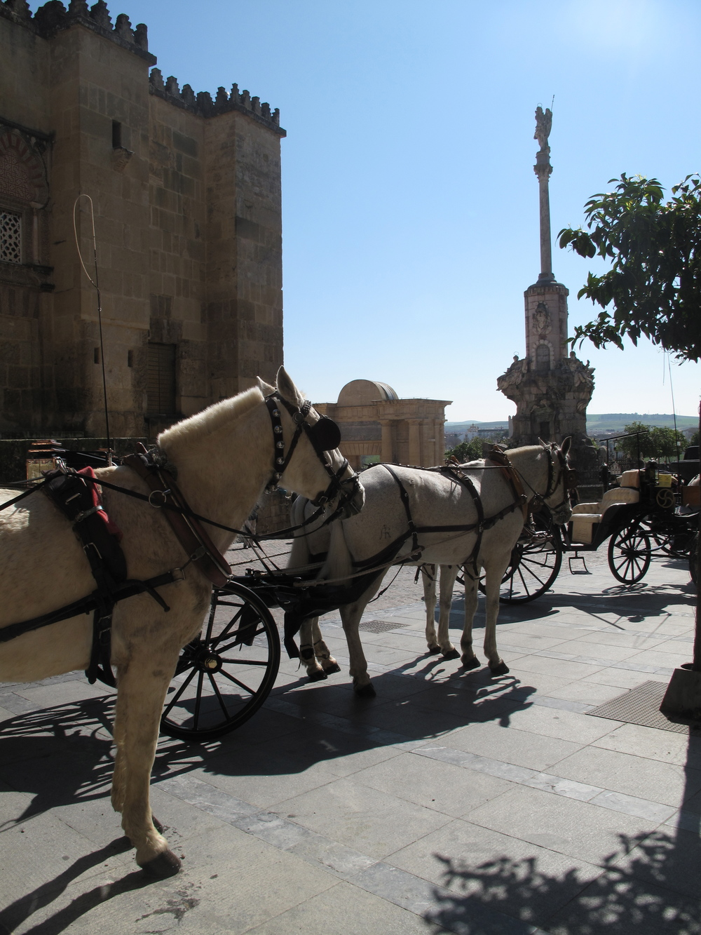 Horses and carriages in Spain