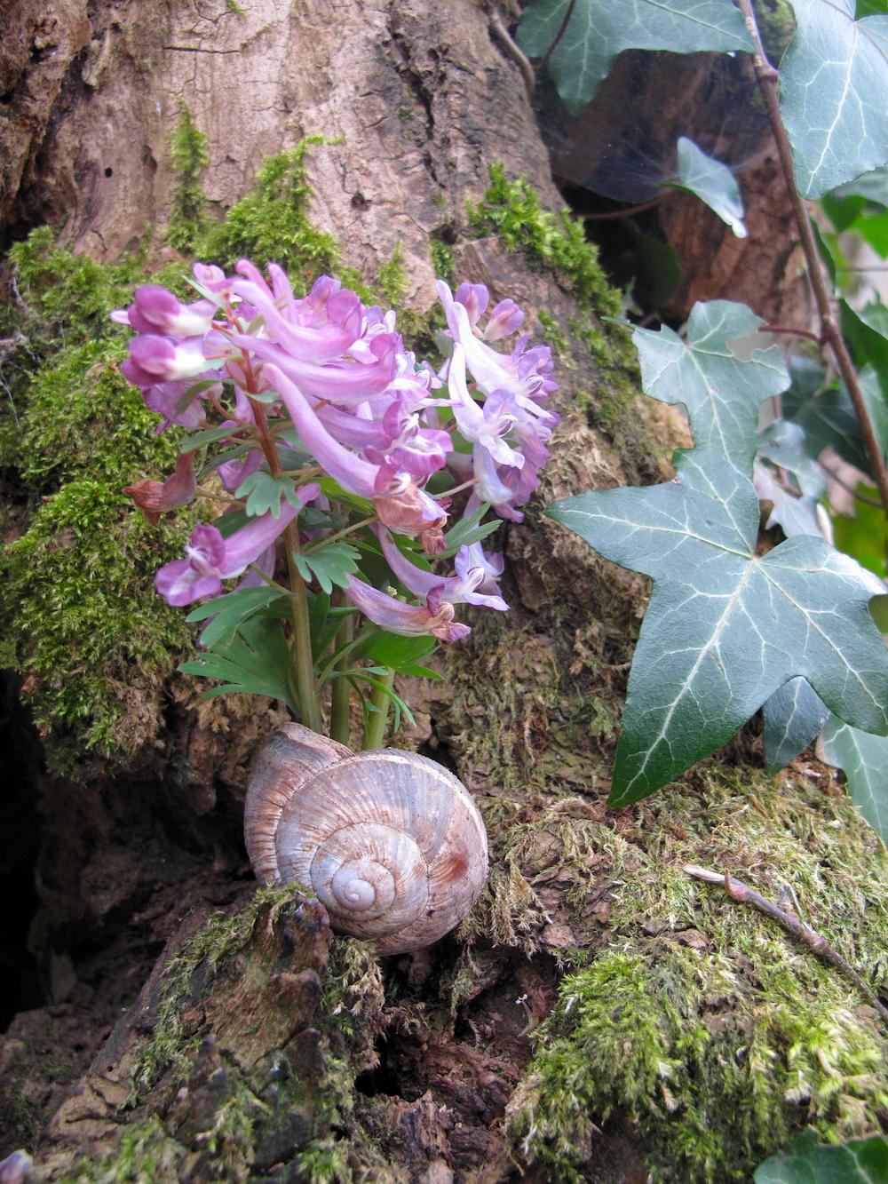 Purple flowers stuck in a snail's shell