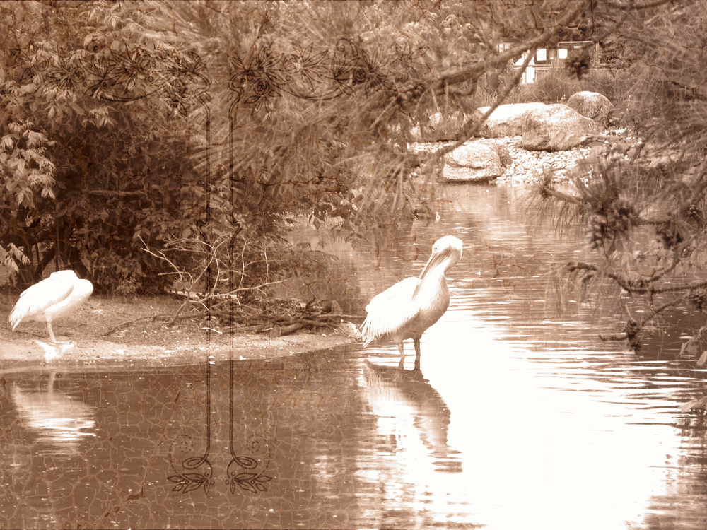 Old style photo of herons in a lake at a garden