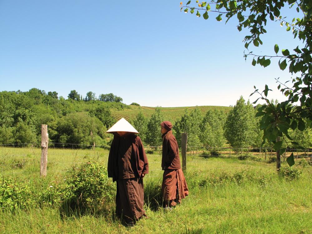 Bhuddist nuns enjoying a walking meditation among the orchard trees at Plum Village