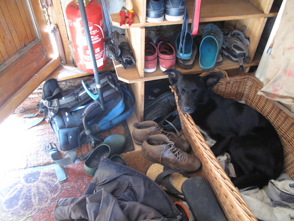 Elza the dog sleeping amongst all the shoes