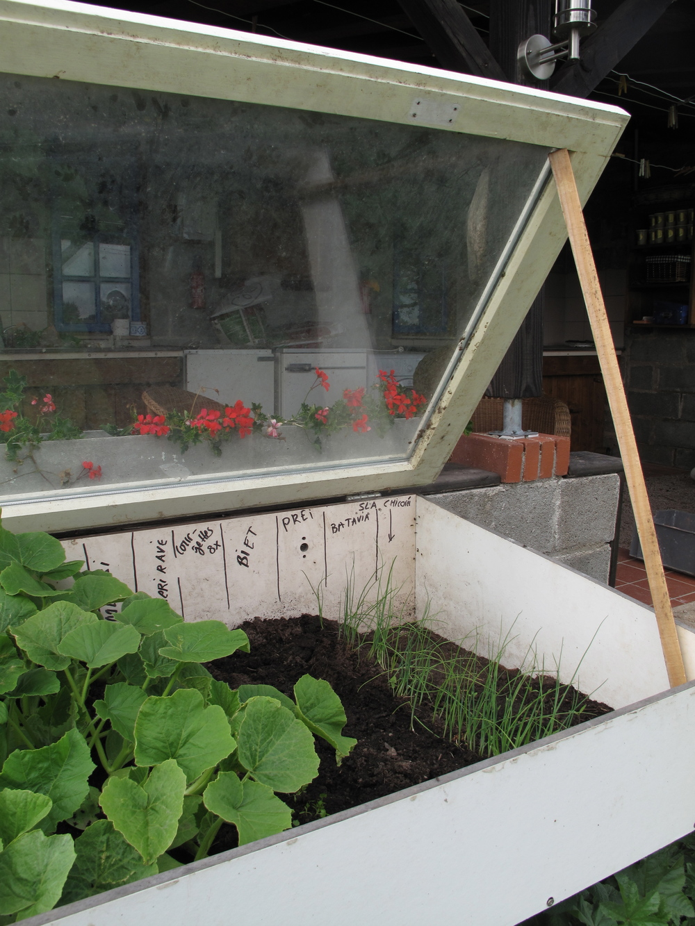 Tiny greenhouse for seedlings made from old school desks