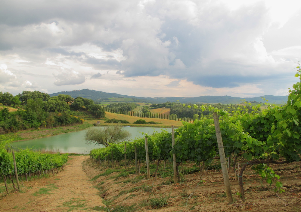 A small blue lake in the middle of vineyards in Tuscany