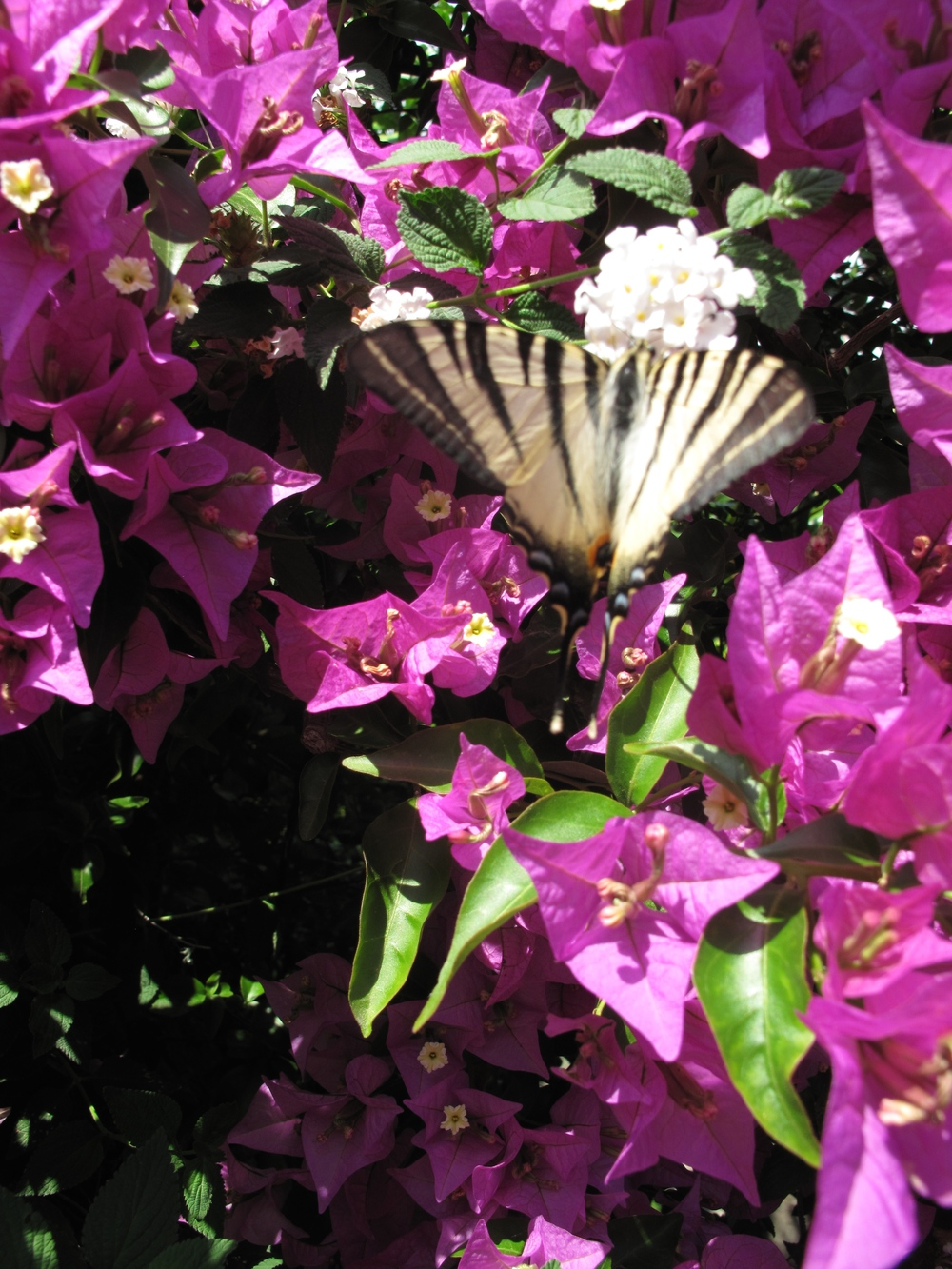Purple flowers and a white and black butterfly