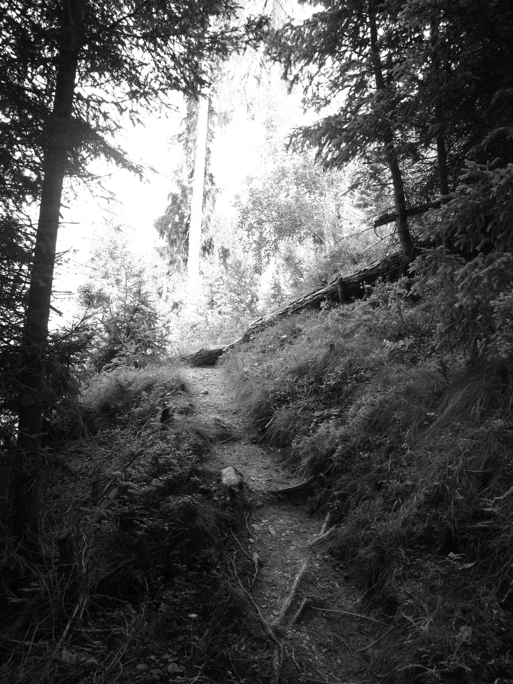 Pathway through the trees up to a waterfall in Austria, in black and white.