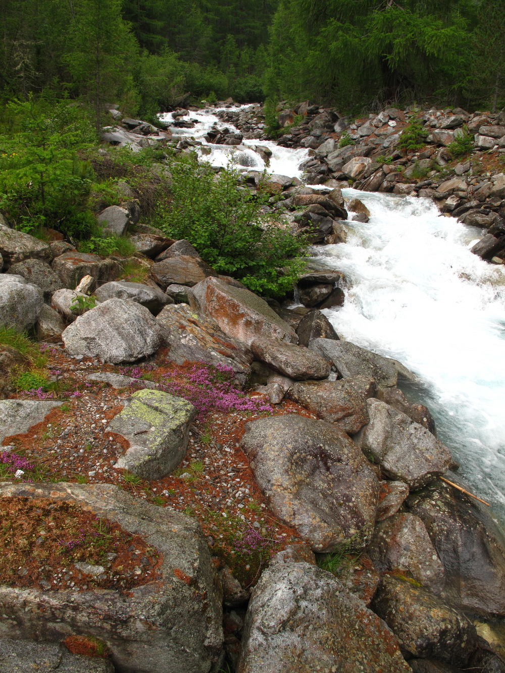 A river in the mountains of Austria, bordered by mossy stones and purple heather.