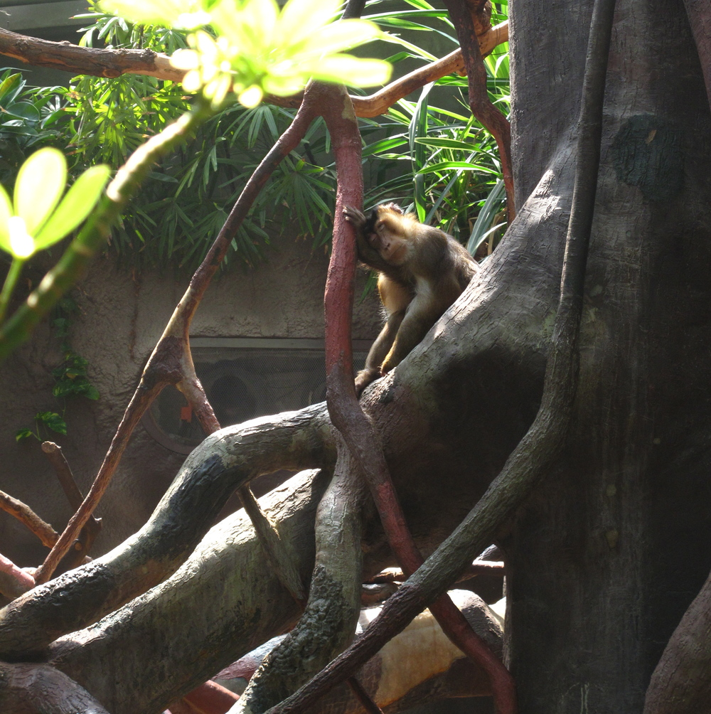 Tired monkey sleeping against a tree branch.