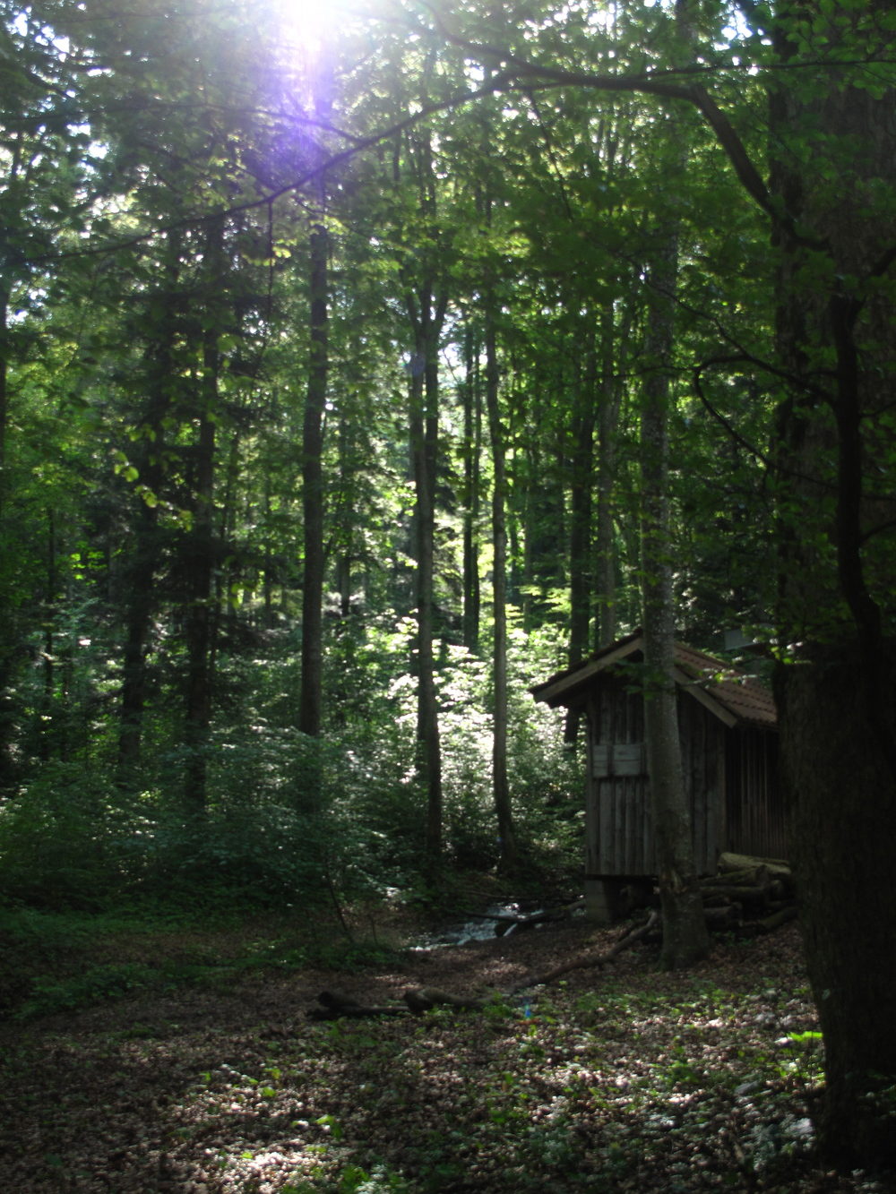 The Black Forest of Germany - a cabin in the woods.