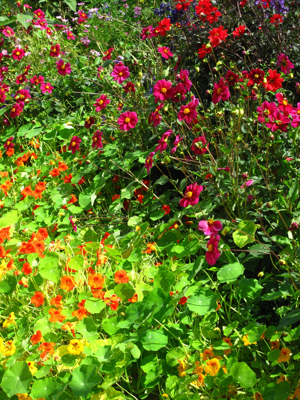 Bright flowers - Giverny in summer time - oranges, pinks and reds.