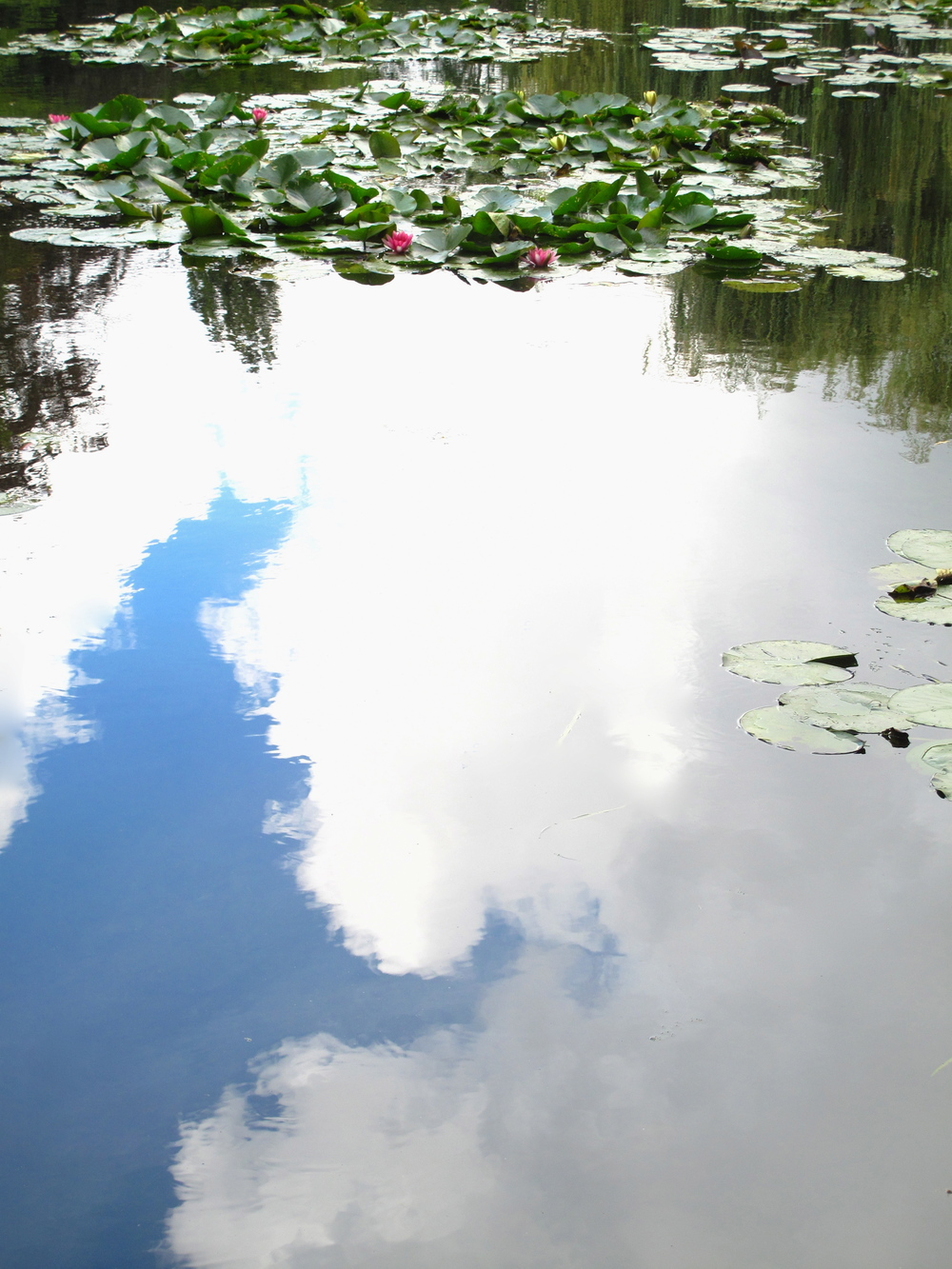 Photograph like a Monet - waterlilies and blue sky at Giverny.