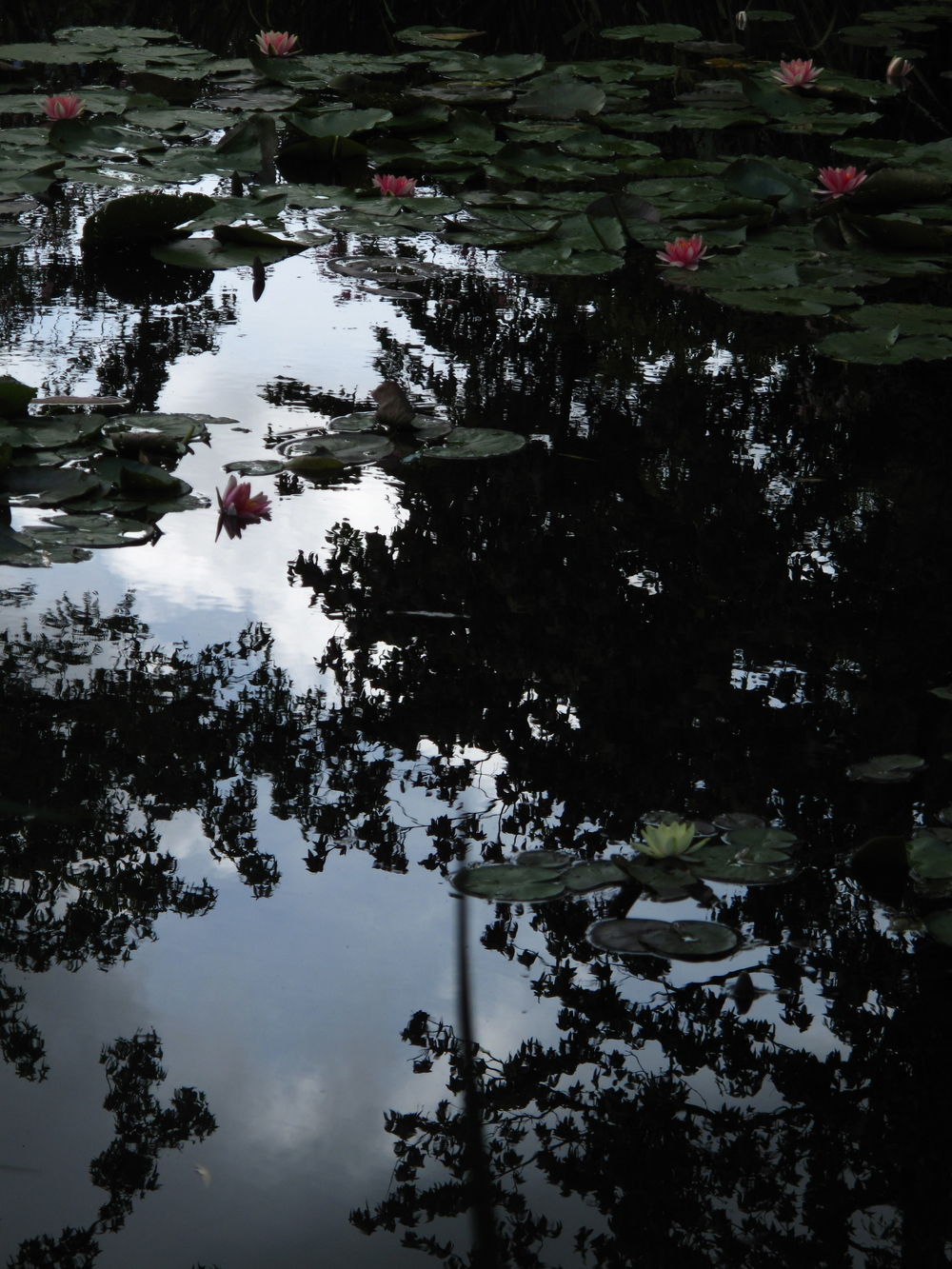 Giverny in late afternoon - tree shadows in the waterlily pond.