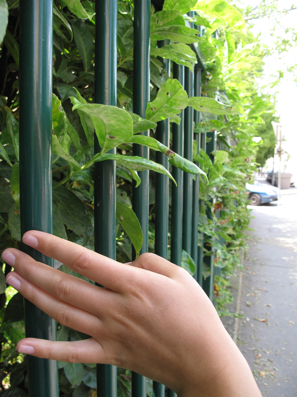 Raking my hand along the rungs of a fence.