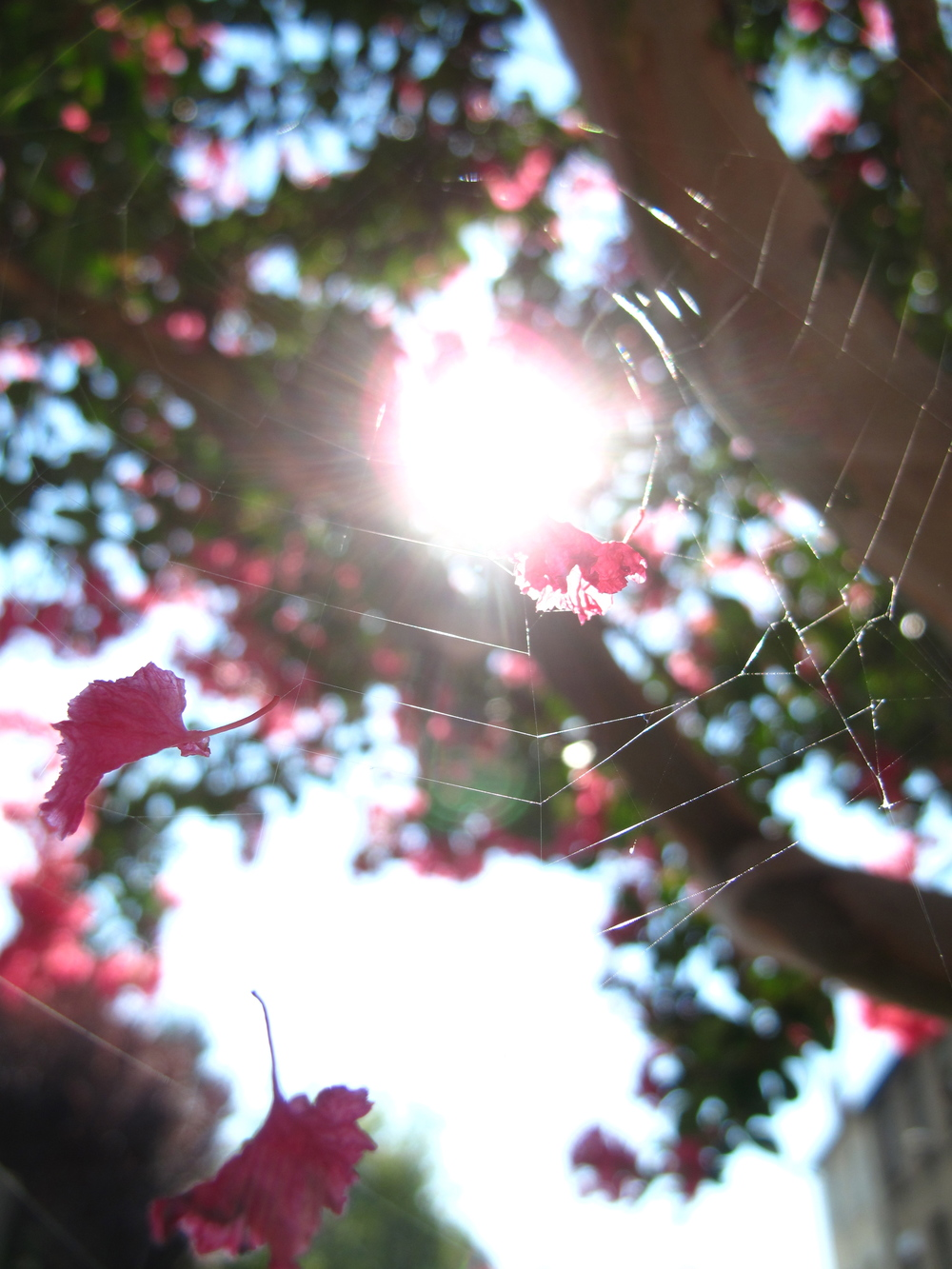 pink petals caught in a spider's web.