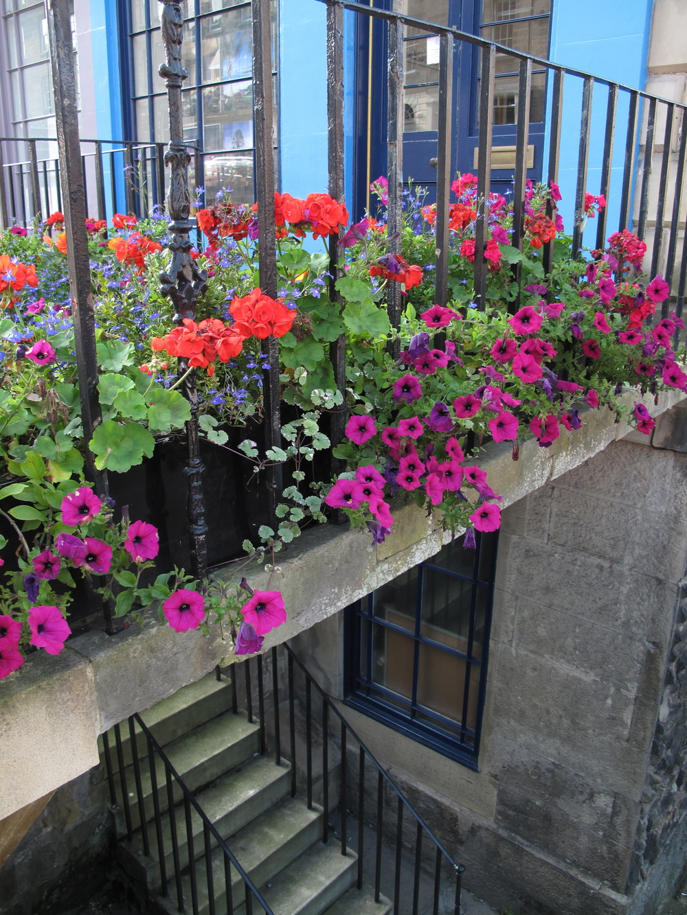 Flowers in New Town, on steps leading to apartments. Edinburgh.