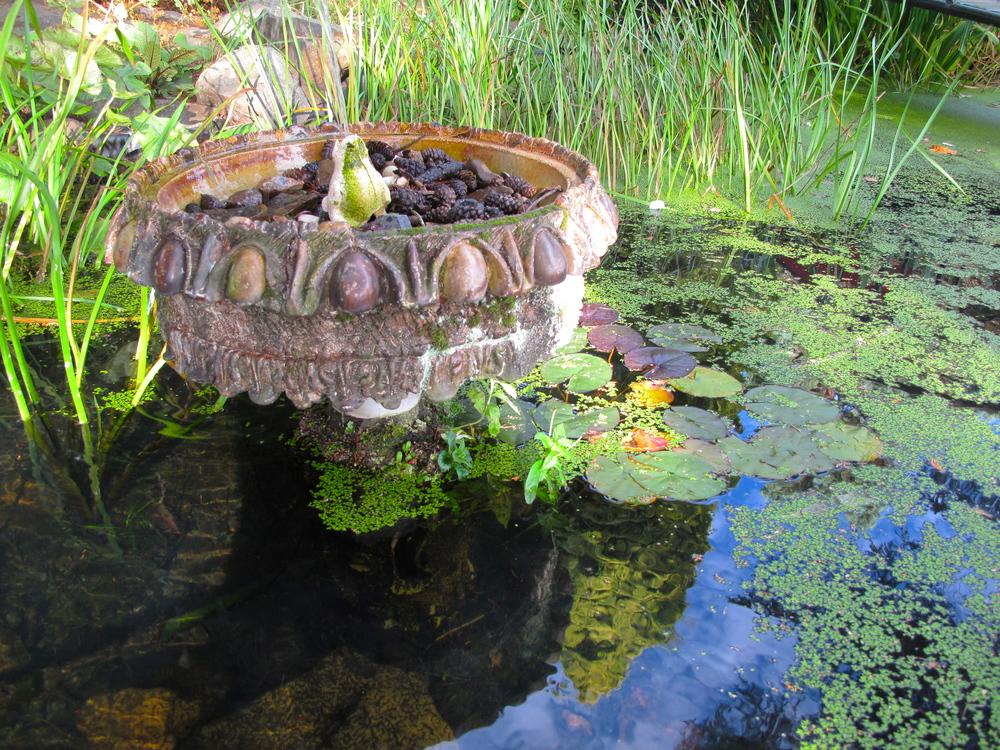 Pond at Dr. Neil's Garden in Edinburgh.