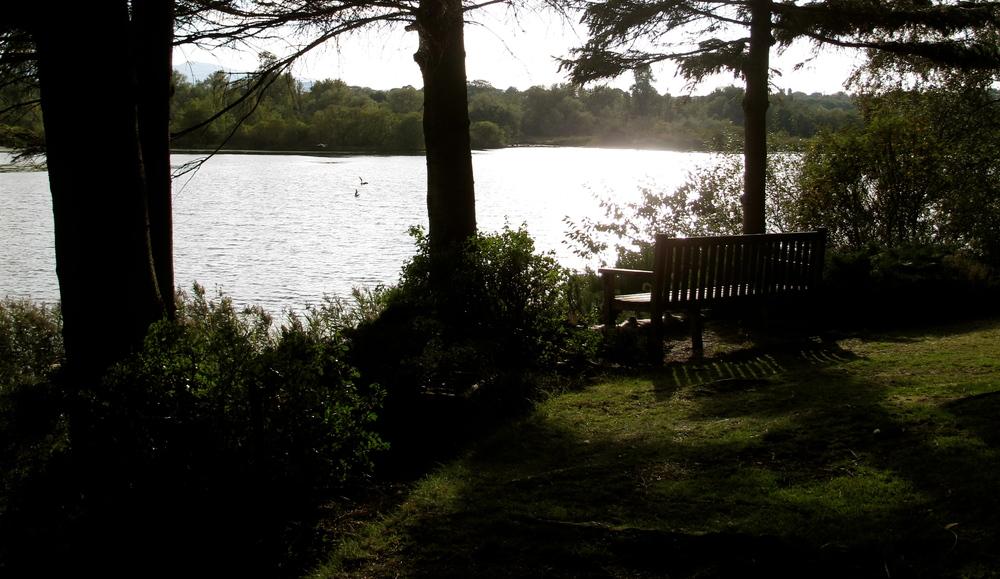 Bench by the lake in Dr. Neil's secret garden in Edinburgh.