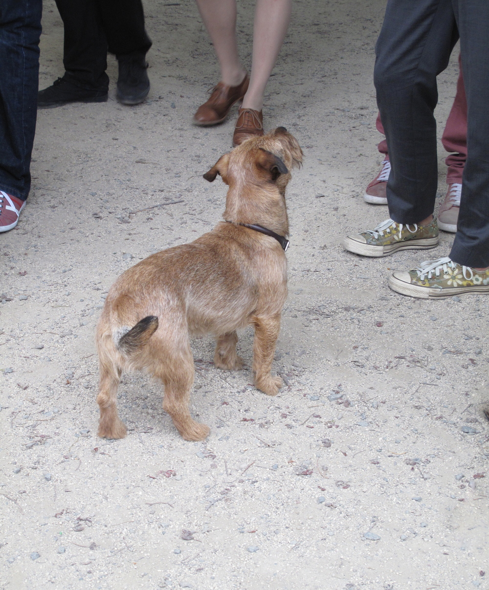 A small terrier dog among hipster shoes at the Stockbridge market.