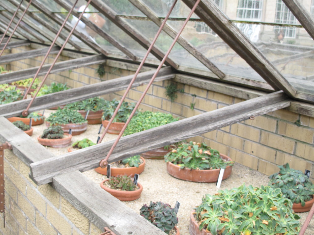 Succulents in a small open top glasshouse.