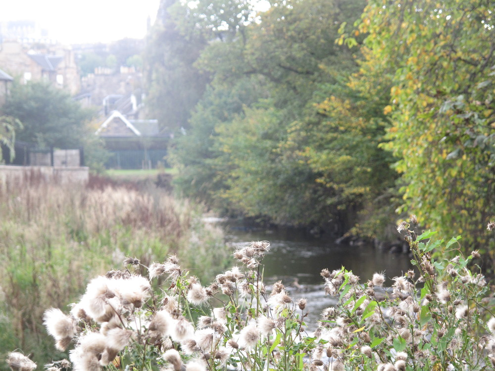 The Leith walkway near Stockbridge, and thistles growing by the river.