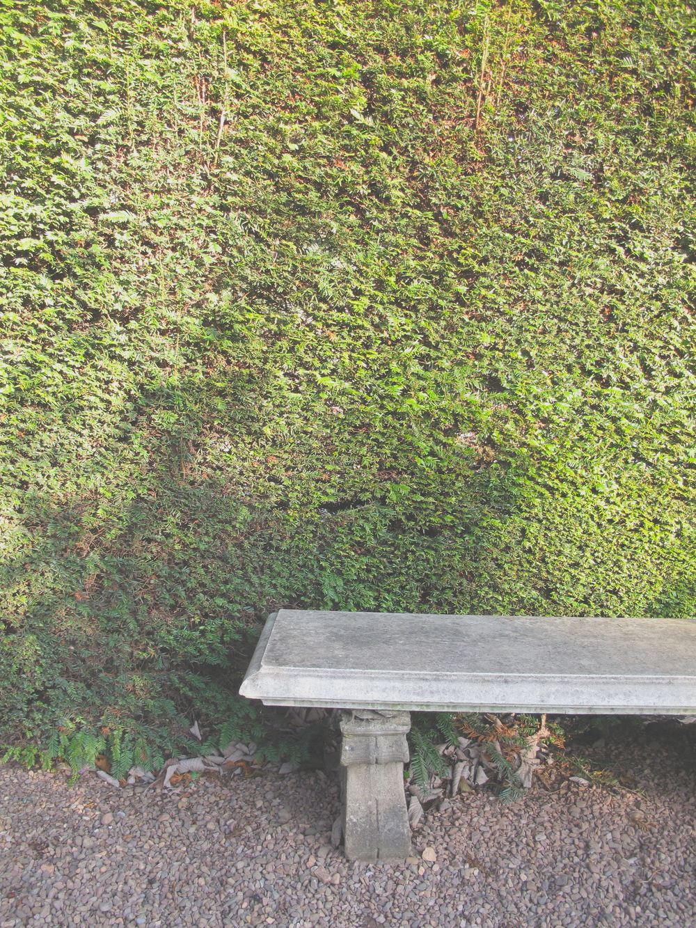 Stone seat and green hedge at Dunbar Close Gardens, Edinburgh.