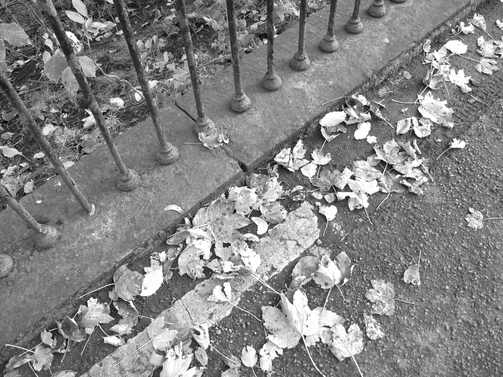 Autumn leaves on sidewalk, black and white