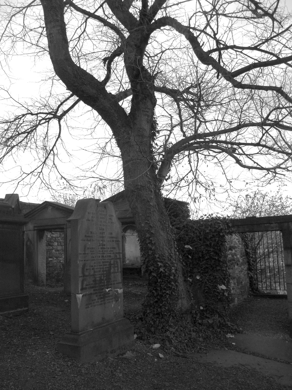 Tombstones and knarled trees in the Old Calton Cemetery